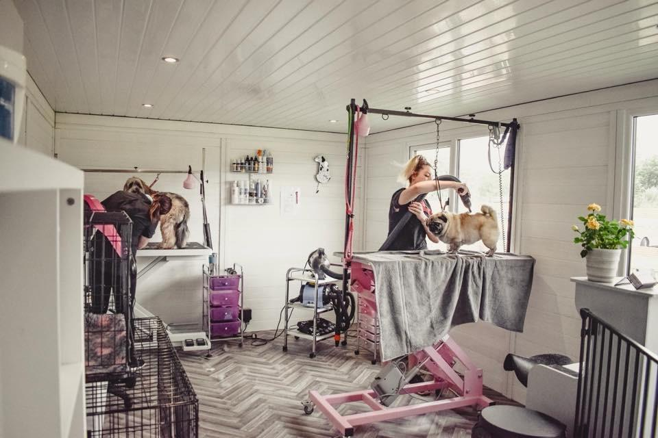 Dog Stylist Room Concept